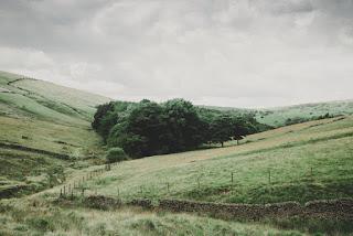 Coline et forêt