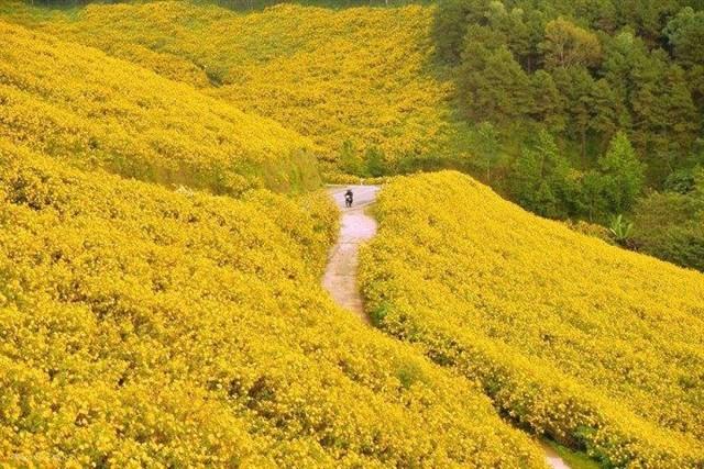 Những cung đường hoa dã quỳ gây sốt tháng 10 ở Đà Lạt