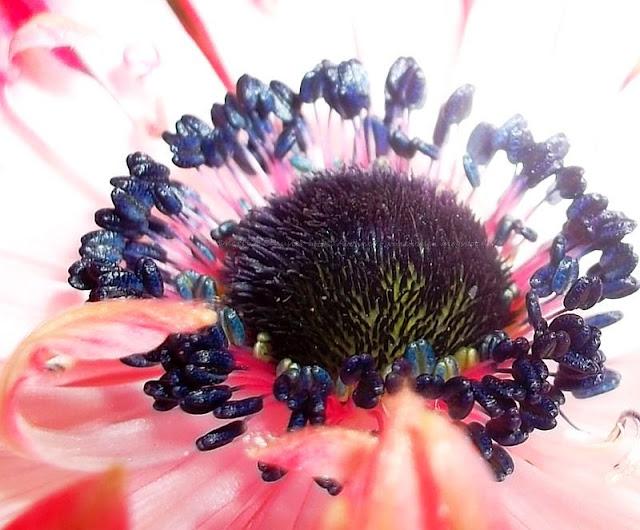 Giftige Pflanzen und Blumen in Gärten und Parks