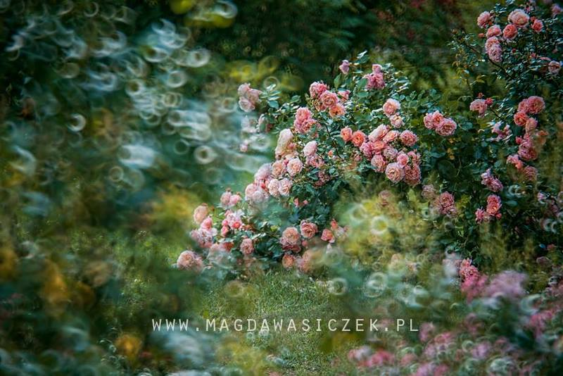 Magda Wasiczek Photography