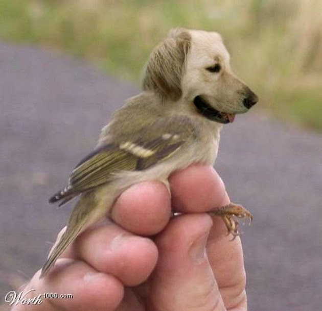 dogs-and-birds-3