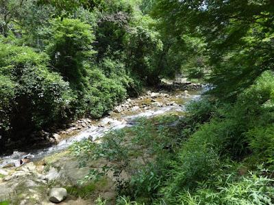 府民の森 ほしだ園地 天の川