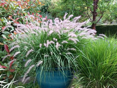 Природні сади - переваги та недоліки