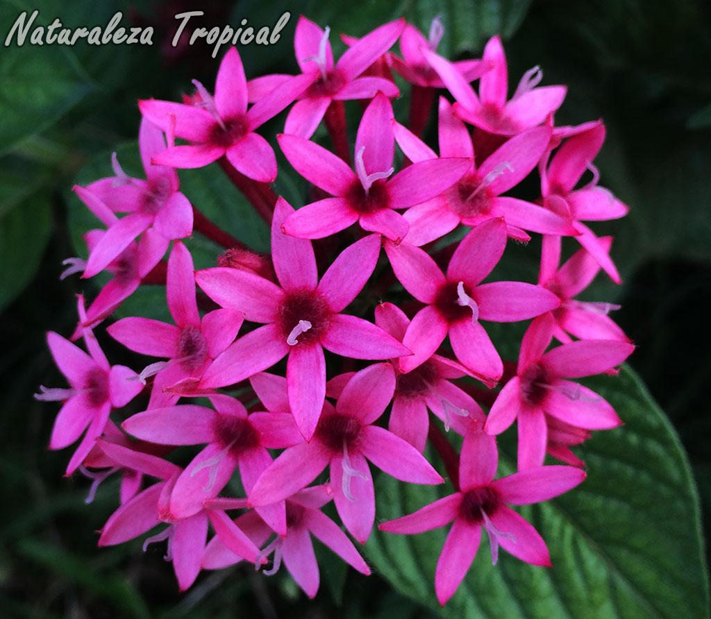 naturaleza tropical identifica tus plantas en el jard n
