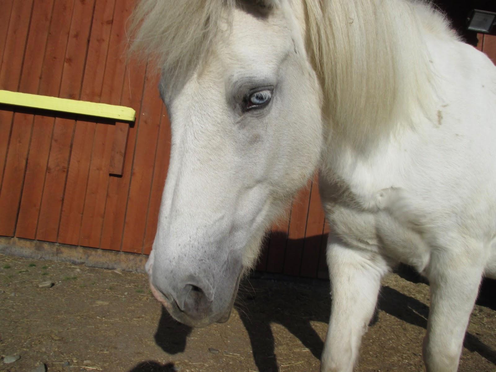 Maailman Kaunein Hevonen