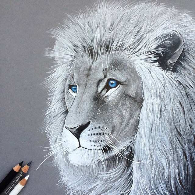 12-Lion-Simon-Balzat-Colored-Pencils-make-Beautiful-Drawings-www-designstack-co