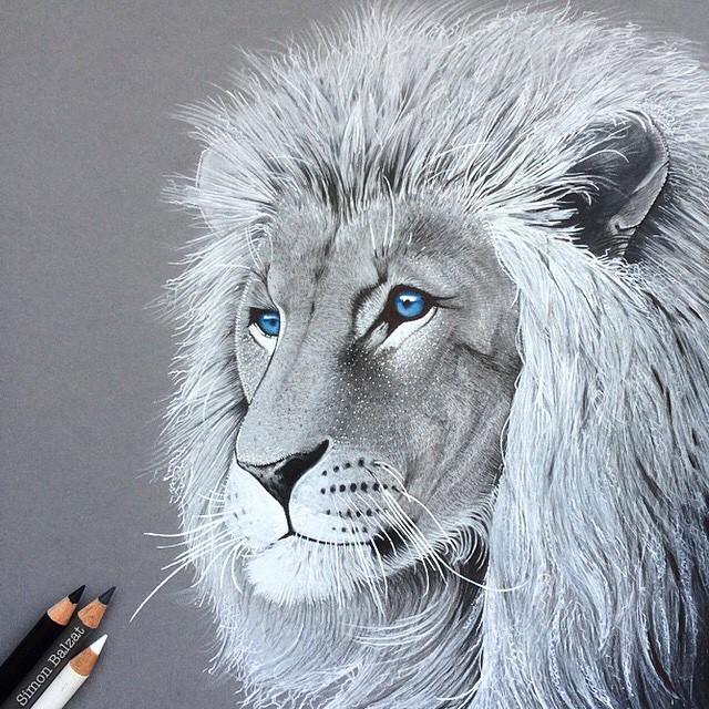12-Lion-Simon-Balzat-Colored-Pencils-make-Beautiful-Drawings-www-designstack-co