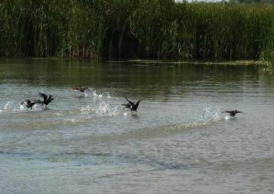 paradisul din Delta Dunarii