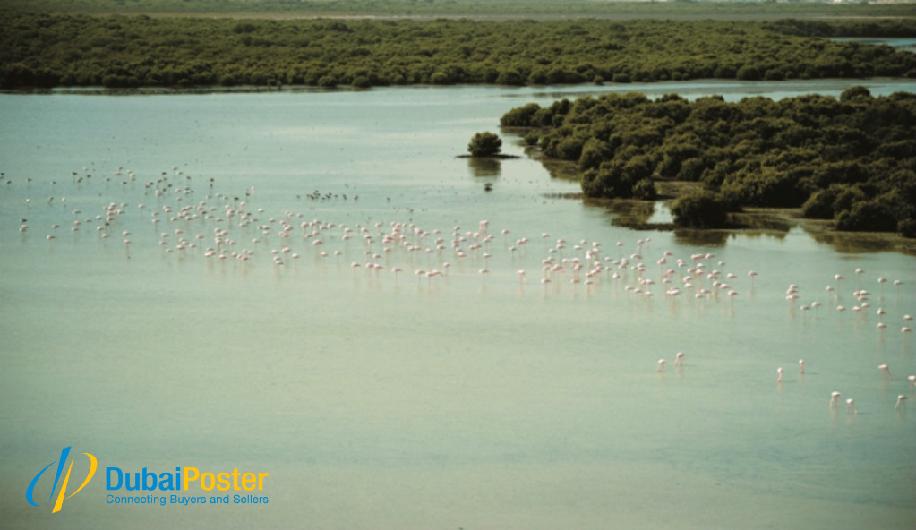Al Zorah Nature Reserve - dubaiposter