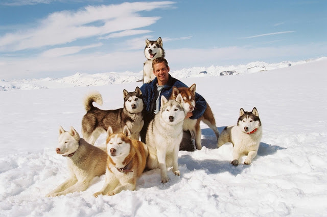Kutup Macerası Eight Below  paul walker and dogs