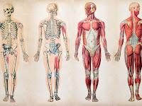52 Fakta Menakjubkan tentang Tubuh Manusia