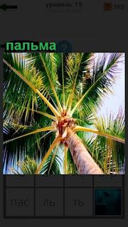 вид снизу на растущую пальму