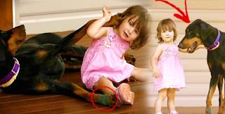 Ο Σκύλος δάγκωσε την 17 μηνών κόpη της και την πέταξε μακρυά. Μόλις κατάλαβε ΓΙΑΤΙ το είχε κάνει, πάγωσε!