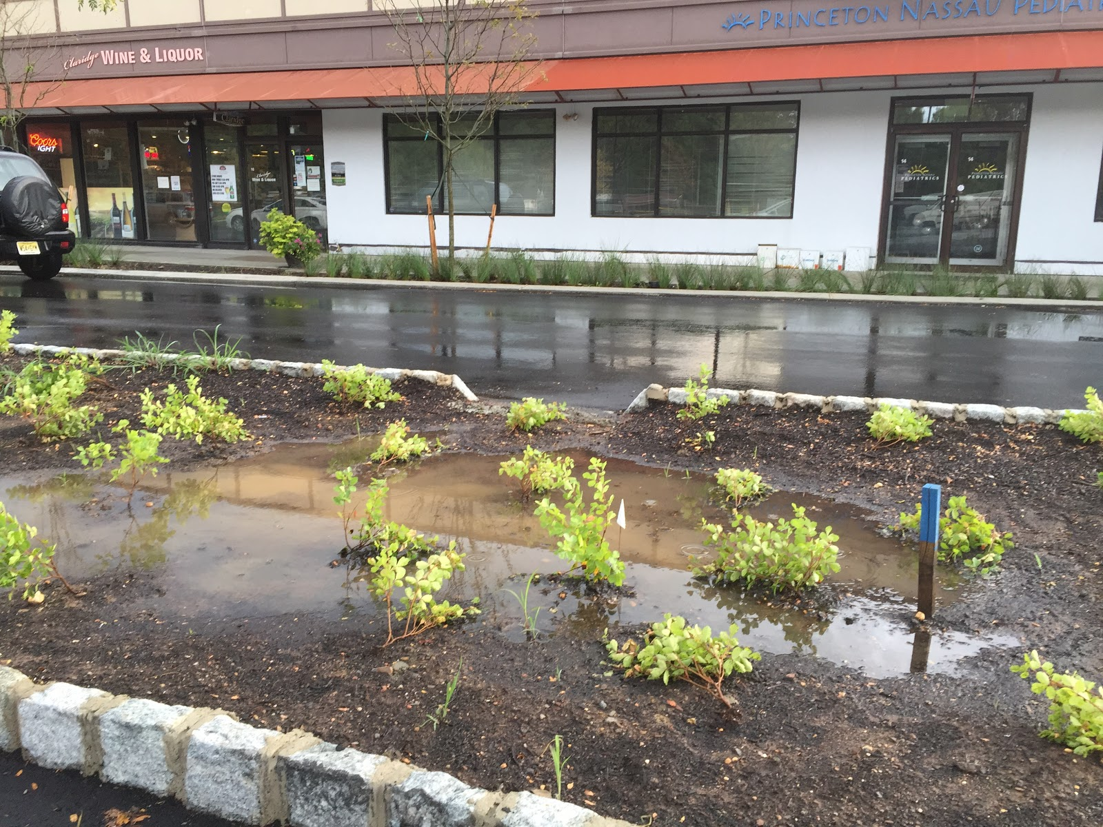 capturing runoff at the shopping center princeton nature notes