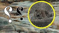 صورة محيرة جداً تحتوي على لغز هل تستطيع أن تكتشف مكان الفهد فيها