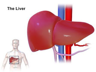 live disease,type of liver disease, liver disease symptoms treatment, Cirrhosis Fatty Liver Juandice (yellowing of the skin any eyes) Hepatitis A Hepatitis B Hepatitis C Gillbert's  Syndrome Liver Cancer,Hepatitis C symptoms
