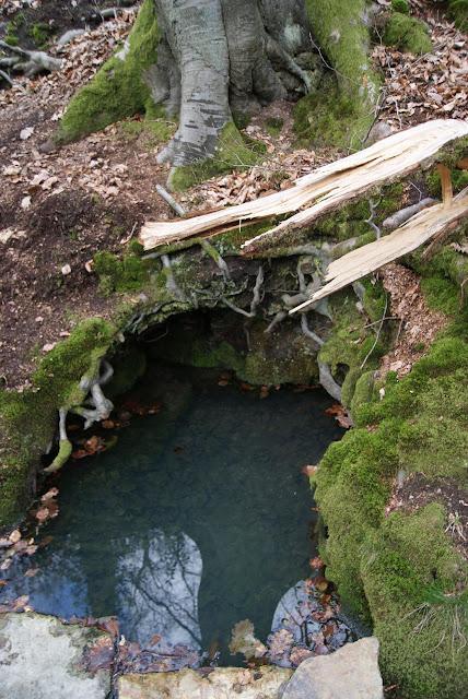 Unter einem Baumstamm befindet sich ein Loch, in dem sich türkisfarbenes Wasser befindet