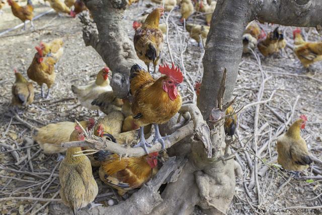 MG 9080 - 熱血採訪│全臺獨家荔枝碗粿就在這!芬園三寶田媽媽,豐富荔枝風味餐、荔枝雞湯值得來嚐鮮!