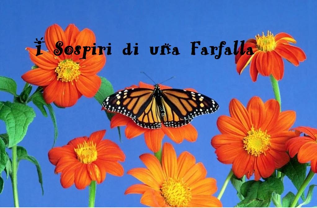 Eccezionale I Sospiri di una Farfalla: Buona Domenica a Te! FZ45