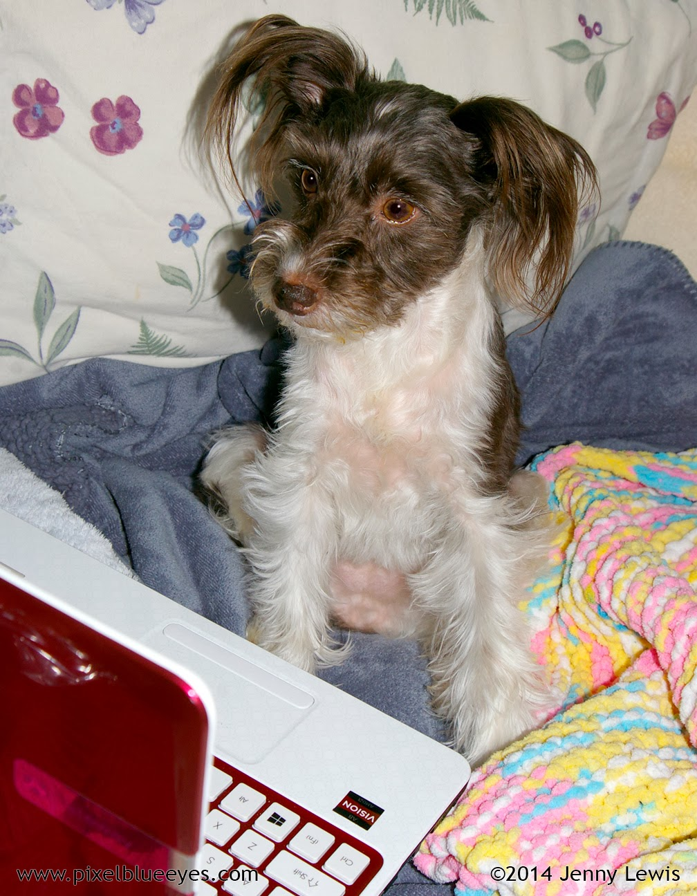 "Image of Pixel Blue Eyes sitting ""Wordless"" in front of her laptop"