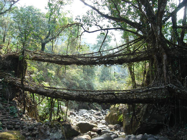 Double Decker Root Bridge Cherrapunji