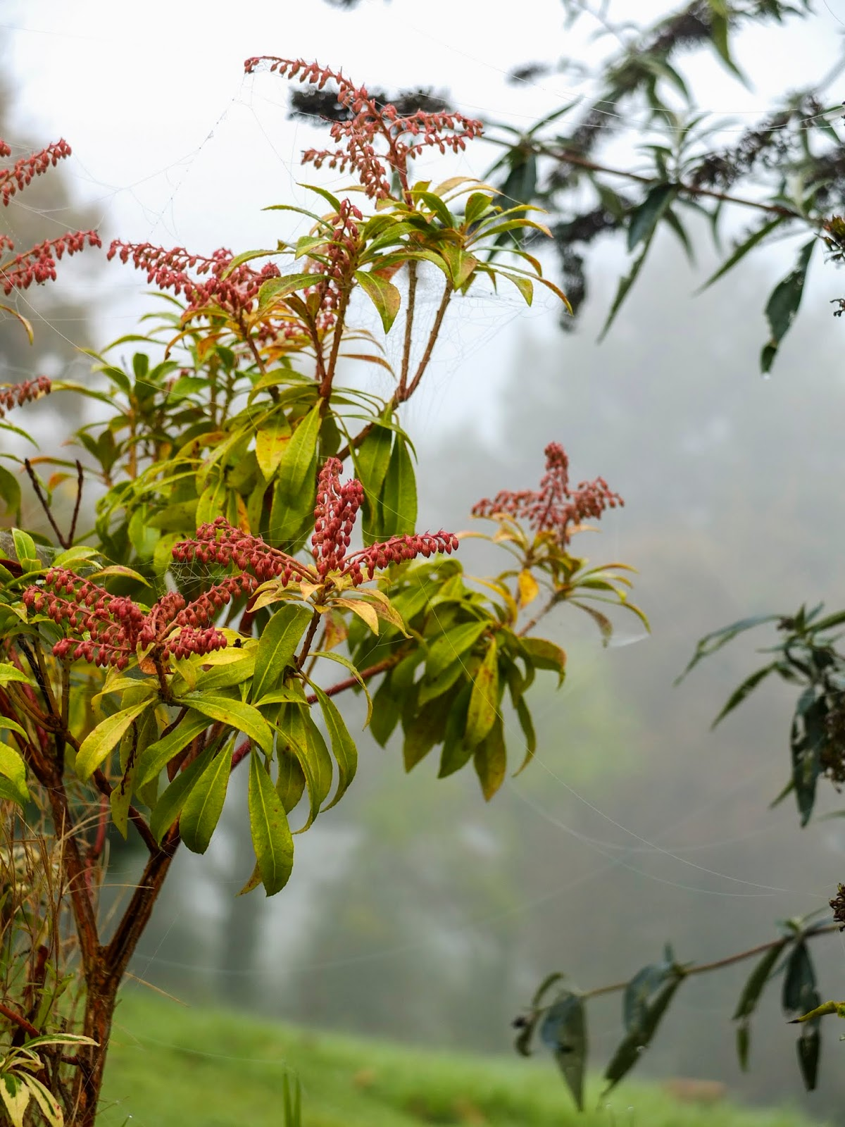 Plants wrapped in spider webs on a misty autumnal day.