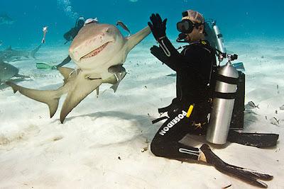 Fotos de tiburón con buzo