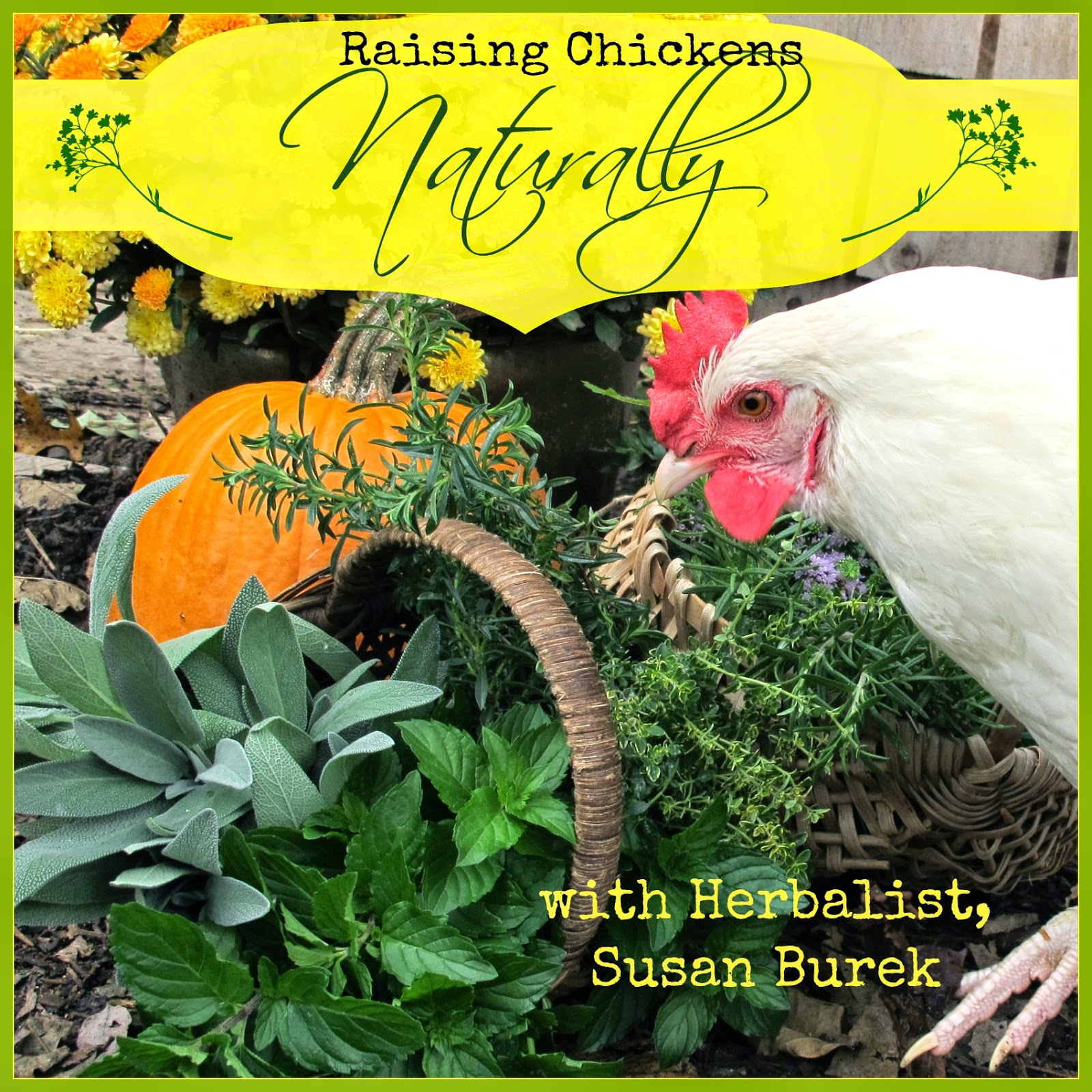 Susan Burek, Herbalist, Pioneer of Raising Chickens Naturally
