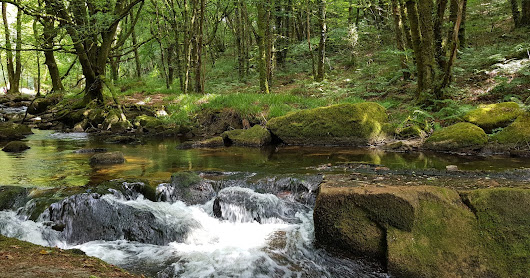 Dog Walks: Golitha Falls