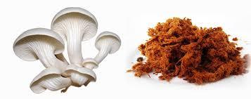 cara-gampang-membuat-abon-jamur-tiram,www.healthnote25.com