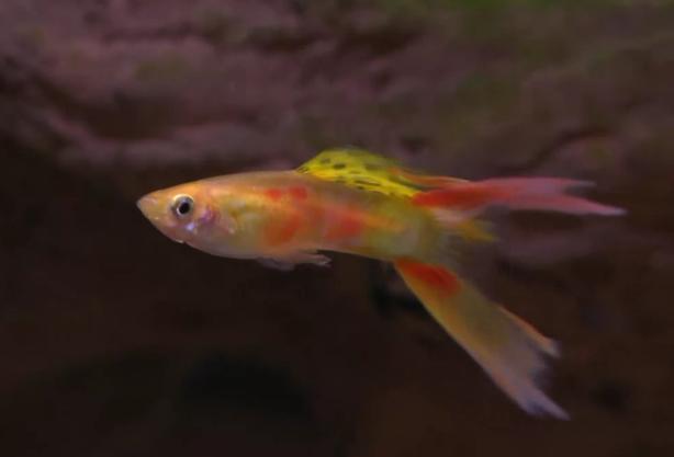 Fish Zone:  fish care
