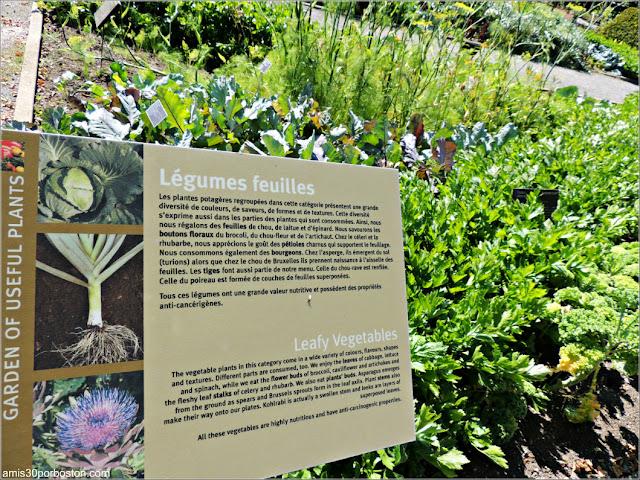 Useful Plants Garden en el Jardín Botánico de Montreal