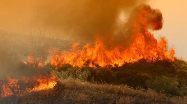Η μεγαλύτερη καταστροφή για την Ελληνική Μελισσοκομία! Τεράστιες φωτιές κάνουν στάχτη το μέλλον μας...