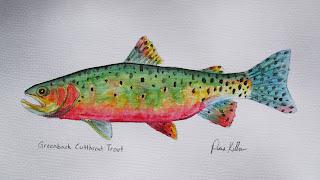 Greenback Cutthroat Trout, Pat Kellner, P. H. Kellner, Fishing Art, Fly Fishing Art, Texas Freshwater Fly Fishing, TFFF, Fly Fishing Texas, Texas Fly Fishing