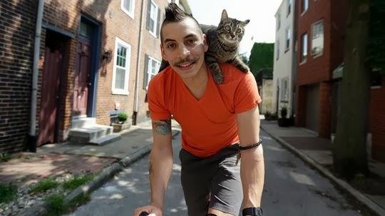 kat op fiets