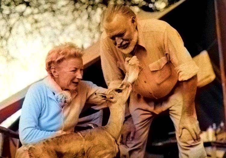2 uçak kazasında ölmeyen yazar Ernest Hemingway ve esi Mary, bu fotoğrafta elleriyle bir ceylanı besliyorlar.