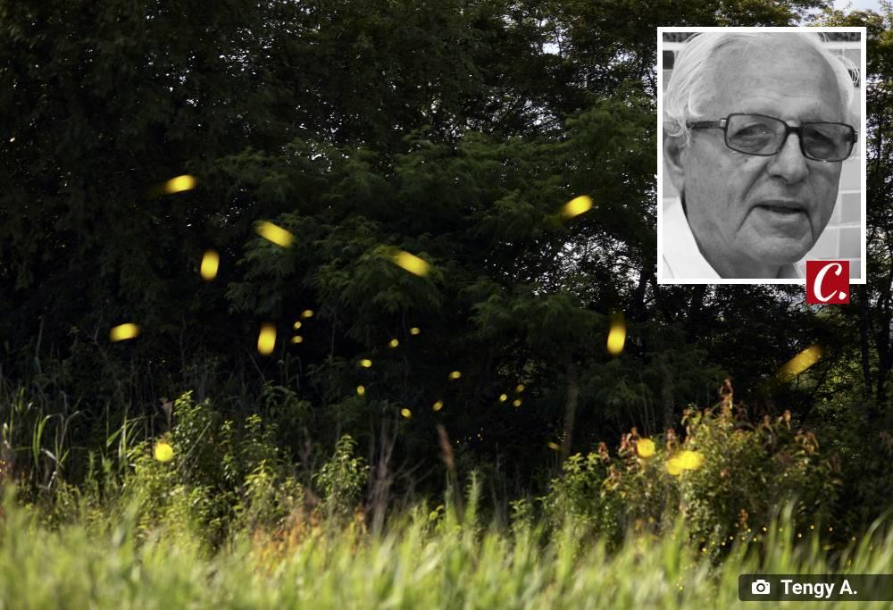 ambiente de leitura carlos romero cronica poesia literatura paraibana jose leite guerra vaga-lume pirilampo flores olhar indiferença natureza