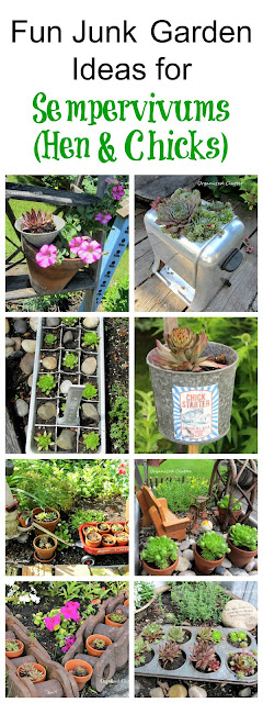 Junk Garden Ideas for Sempervivums (Hen & Chicks)