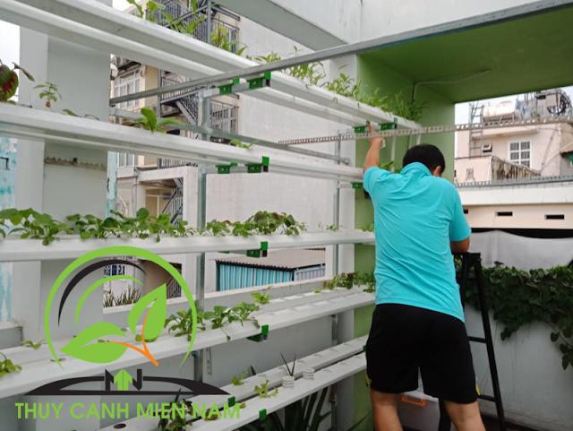 trồng rau muống thủy canh tại nhà
