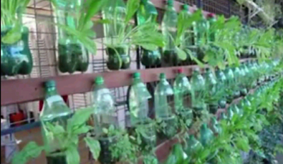Cara Menanam Sayuran di Botol Aqua Bekas