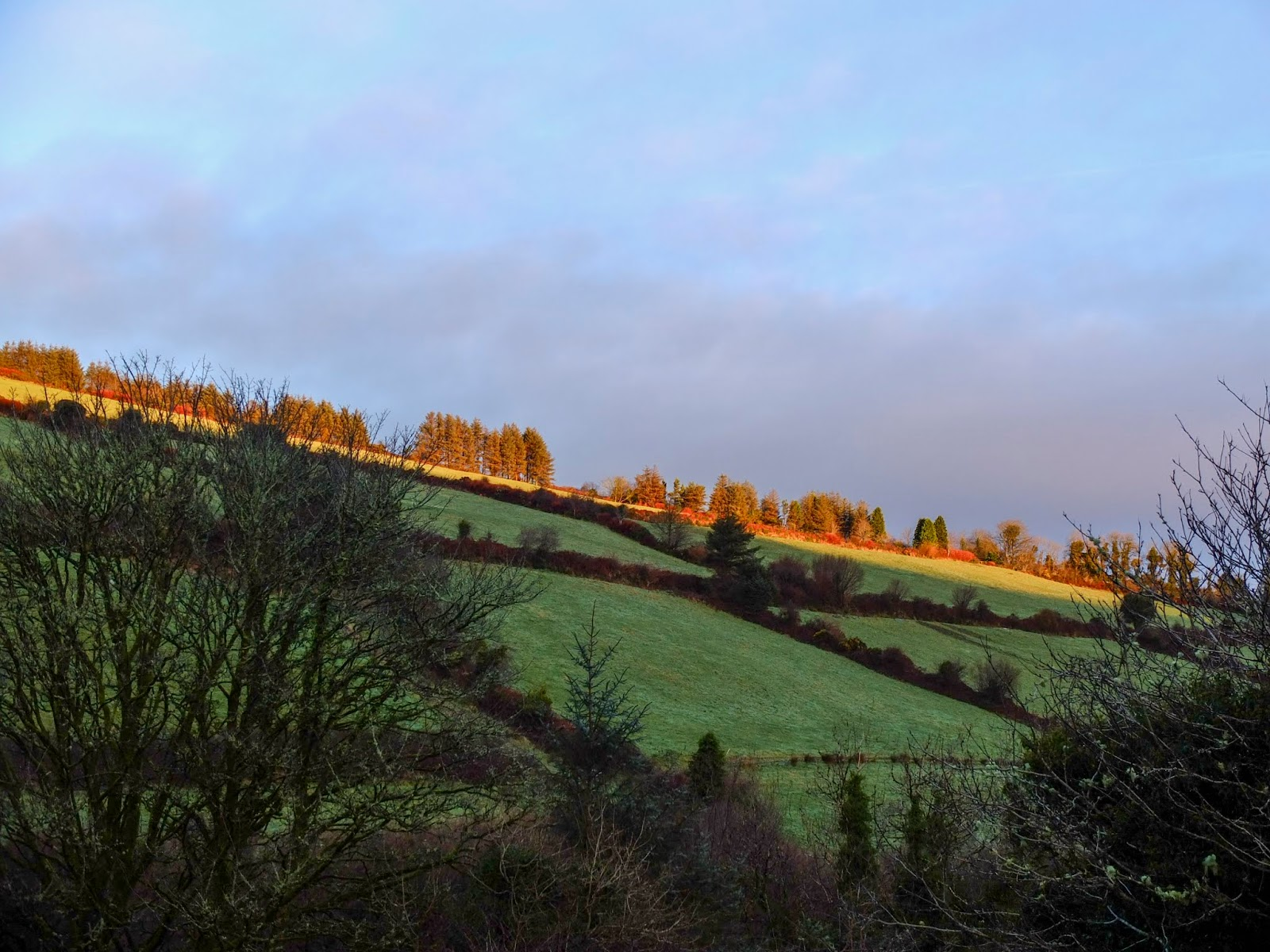 A sunlight beam across the top of the hillside illuminating some trees.
