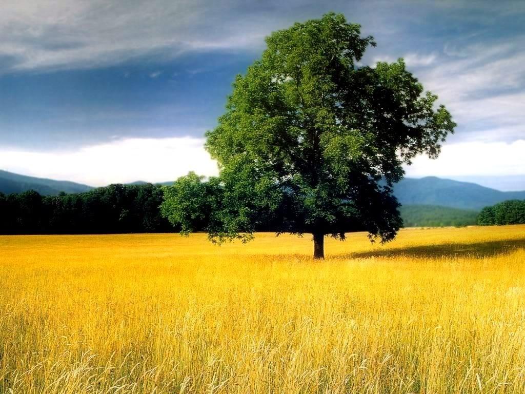 beautiful yellow field landscape - photo #13