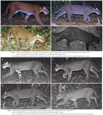 Species New to Science: [Mammalogy • 2015] The African