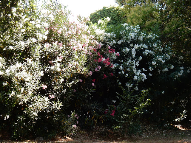 Silverado Trail, Napa Valley, Sonoma, California, Elisa N, Blog de Viajes Argentina