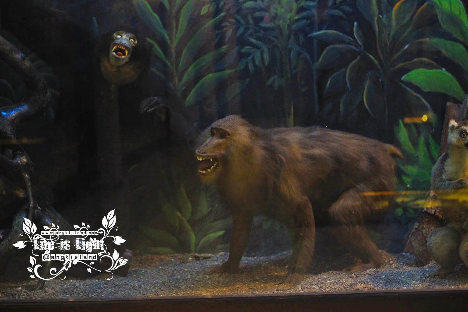 monyet Gembiraloka