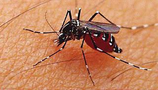 Musim Hujan Telah Tiba, Waspadai Nyamuk Demam Berdarah