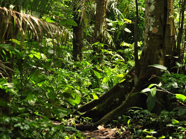 Sottobosco Foresta Pluviale