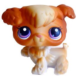 Littlest Pet Shop Small Playset Poodle (#37) Pet