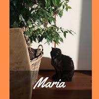 http://www.noimpactjette.be/2017/04/participants-maria-co.html