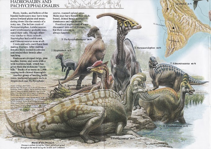 Vintage Dinosaur Art: Dinosaurs, National Geographic, January 1993 - Free poster bonus!